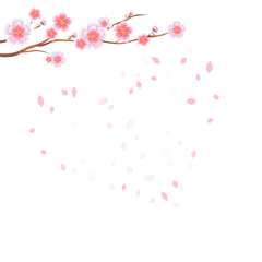 Branch of Sakura with Pink flowers and flying petals isolated on White background. Petals Heart. Apple-tree flowers. Cherry blossom. Vector