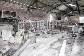 Interior ruins of rural outbuilding.