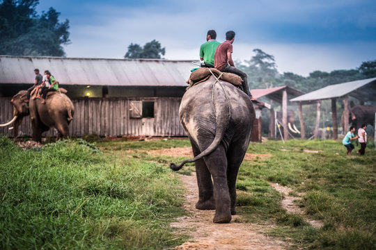 Two nepalese men riding on the elephant toward the stable, Nepal.