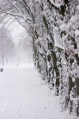Schneebehangene Bäume