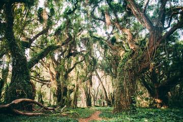 old trees Hawaii