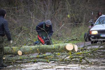 Worker lumberjack cuts fallen tree on the road