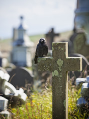 Crow on grave stone at cemetery