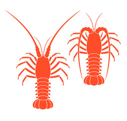 Spiny lobster set. Isolated spiny lobster on white background