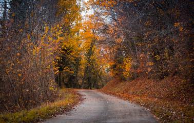 landscape autumn colorfull