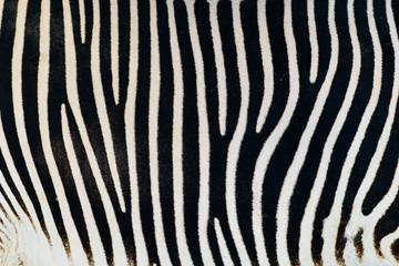 Fotobehang Zebra Black And White Zebra Skin Texture