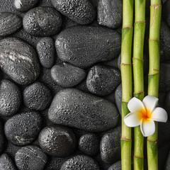 plumeria i bambusowy gaj na czarnych kamieniach w kroplach wody
