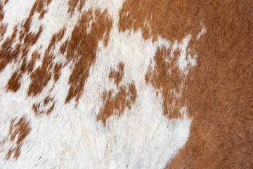 White and brown Cow skin texture and background