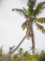 Boy climbing up a coconut tree