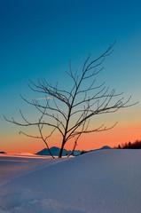 Paesaggio innevato al tramonto