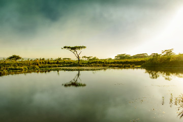 Drakensberg mountains South Africa water hole tree