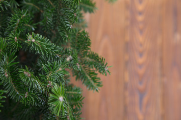 Background with fir tree and wood