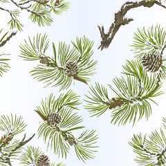 Seamless texture pine various branches and cones needles and snow  vintage vector botanical illustration for design editable hand draw