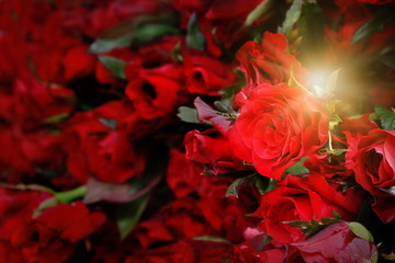 group of many red rose pile with yellow light fare look luxury, concept love feeling in valentine day or wedding day