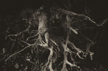 dark tree roots background