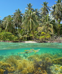 Above and below water surface on wild beach shore with corals and fish underwater, Caribbean sea, Panama, Zapatilla islands