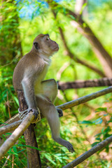 a pensive lonely monkey sits on a fence in the shade of a tree