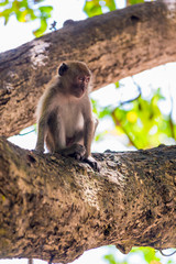 the monkey sits on a thick branch of a tree and looks somewhere aside