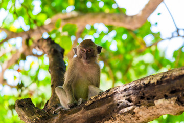 the monkey sits on the tree and looks at the frame