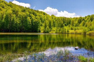 lovely pond in the forest on a hillside. serene day in springtime outdoors
