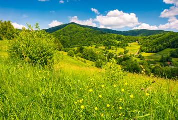 grassy fields in mountainous rural area. lovely rural landscape of Carpathian mountains in summer