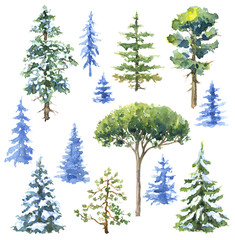 Watercolor Conifers  and Evergreen Trees