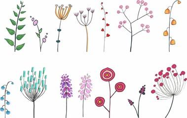 botanic flower illustration