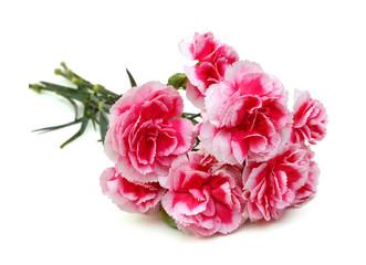 Decorative pink carnation flowers