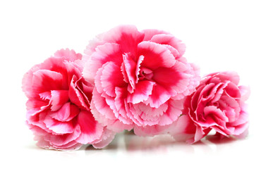 Decorative pink carnation flowers