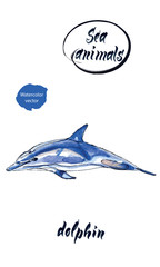 Blue dolphin, watercolor hand drawn vector illustration