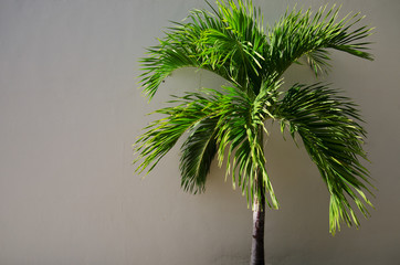 Young palm and wall