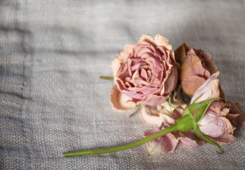 Beautiful soft pink rose.  Nice setting for sweet invitation