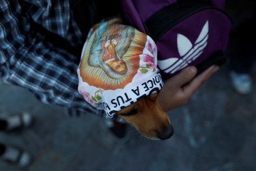 A dog wearing a scarf with an image of the Virgin of Guadalupe, is carried at the Basilica of Guadalupe during the annual pilgrimage in honor of the Virgin of Guadalupe, patron saint of Mexican Catholics, in Mexico City, Mexico