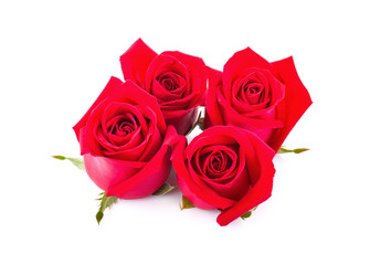 Fresh red roses isolated on white background.