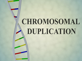 Chromosomal Duplication concept