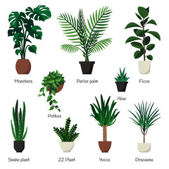 Vector isolated set of various indoor ornamental plants with names.  Common, popular  houseplants : monstera, parlor palm, ficus, rubber plant, pothos, aloe, snake plant, zz plant, yucca, dracaena