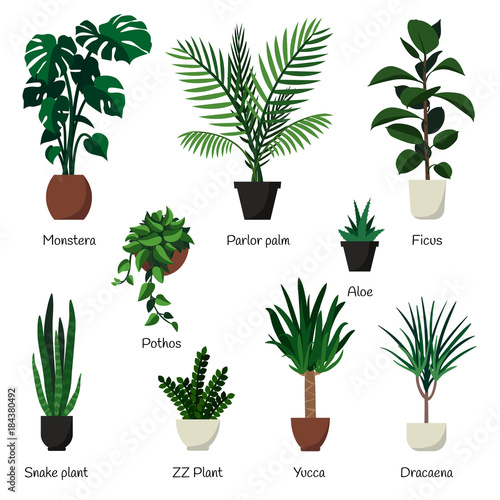 Vector Isolated Set Of Various Indoor Ornamental Plants With Names Common Popular Houseplants