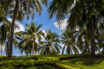 Background photo : coconut trees cloudy and sky