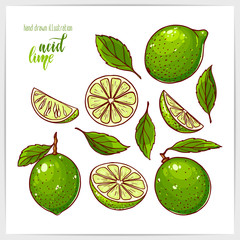 Colorful set of ripe and tasty lime, whole and sliced, with leaves. Hand drawn illustration with hand lettering headline.