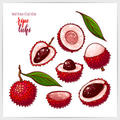 Colorful set of ripe and tasty lichi, whole and sliced, with leaves. Hand drawn illustration with hand lettering headline.