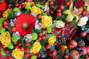 christmas,plant,flower