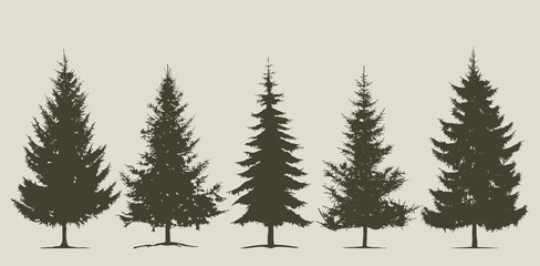 Christmas, coniferous tree silhouette