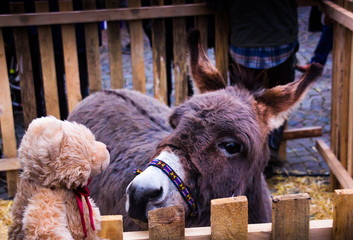 Teddy bear Dranik and a donkey