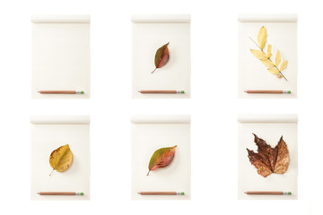 set of paper note with leaf, pencil isolated on the white background.