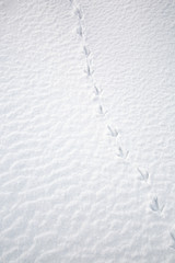 traces of a bird in the snow