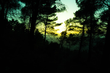 Silhouette of a forest with trees at a spring sunset