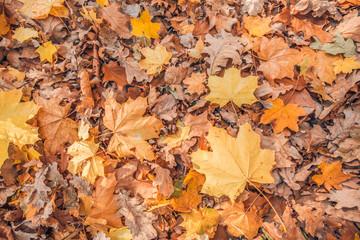 Autumnal scene. Autumn colors and blurred background, calm autumn nature concept