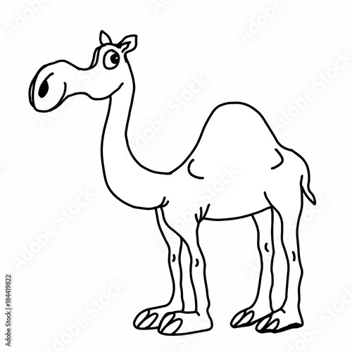 cute camel illustration drawing coloring