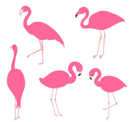 Pink flamingo set, vector illustration.