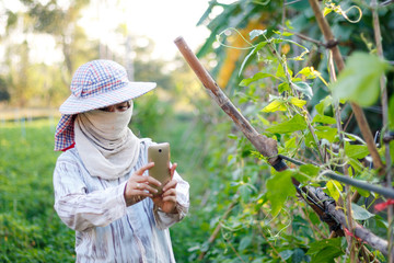 Farmer using mobile phone smartphone to shooting photo of plant in nature farm